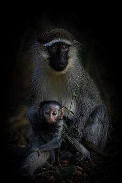 Ein Gepäckträger einer schmierigen Affenmutter mit Baby. von Gunter Nuyts