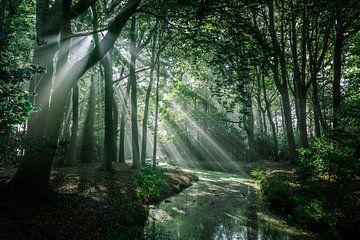 Zonnestralen in het bos van Erik Hageman