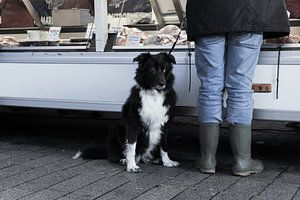 Hond op de markt