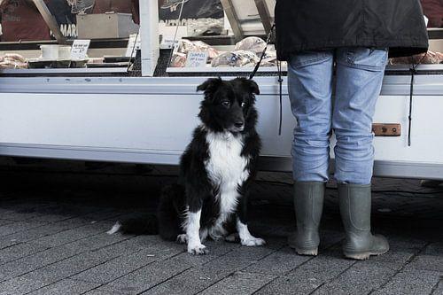 Dog on the market sur
