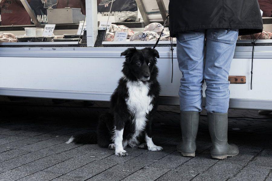 Hond op de markt van Kim Verhoef