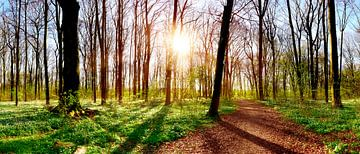 Waldweg im Gremberger Wäldchen von Günter Albers