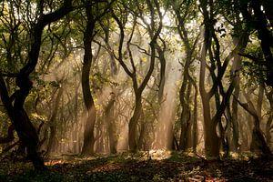Mysterieus bos van