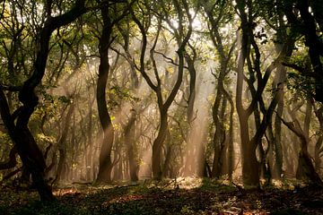 Forêt mystérieuse sur @ GeoZoomer