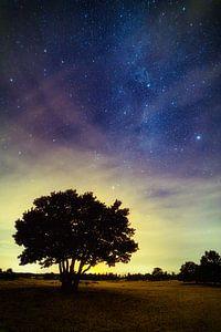 Das Universum mit Baum im Vordergrund