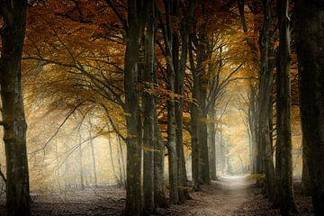 Welchen Weg würden Sie wählen? von Kees van Dongen
