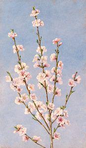 John William Hill-Persische Blumen