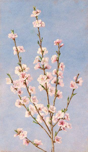 John William Hill-Persische Blumen von finemasterpiece