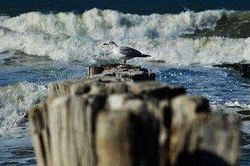 Meeuw op  strandpalen van Blond Beeld