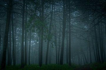 Mistig bos na een regenbui. van Theo van Woerden