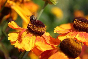 Gelbe Blume mit Biene von Ingrid Meuleman