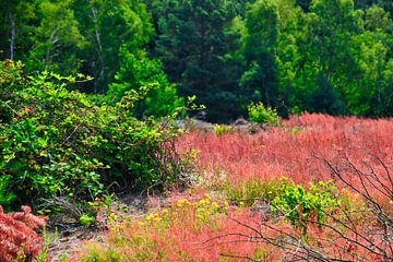 Rode heide en groene bomen van J..M de Jong-Jansen