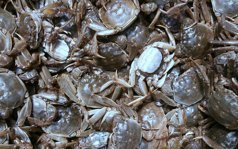 Seafood van Jon Houkes
