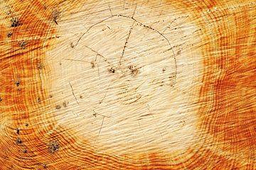 Jaarringen en knoesten in een vers gezaagde boomstronk van Annavee