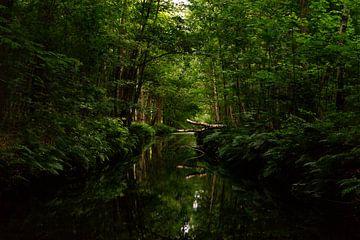 omgevallen boom over rivier van Mike Van Zijderveld