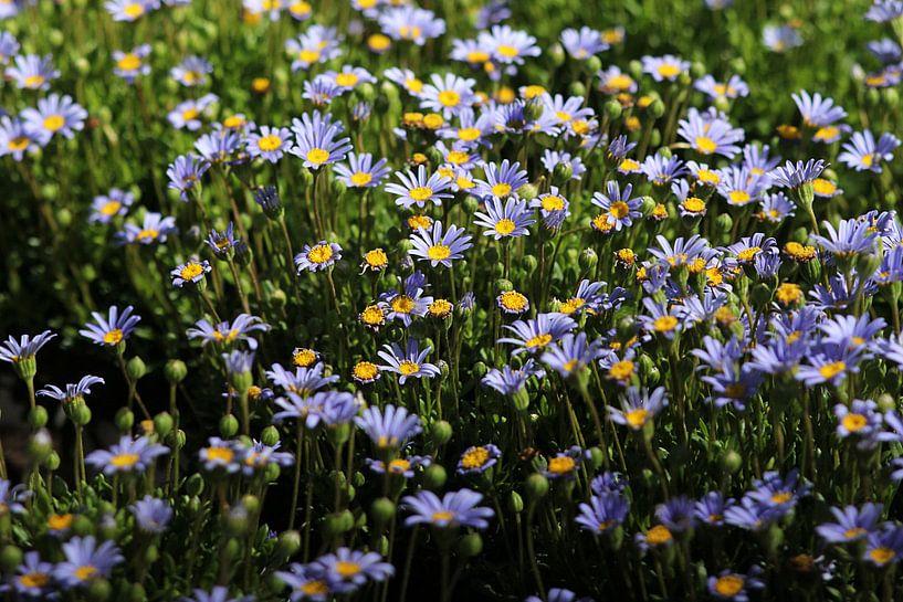 Blue Spring van Cornelis (Cees) Cornelissen
