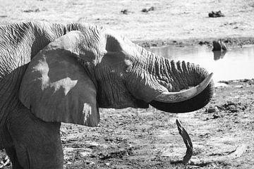 Olifant van Thijs GROENHUIS