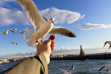 Vogels voeren in Istanboel van Caught By Light