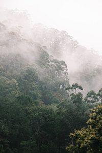 Mist tijdens de treinreis van Ella naar Kandy, Sri Lanka van Rebecca Gruppen