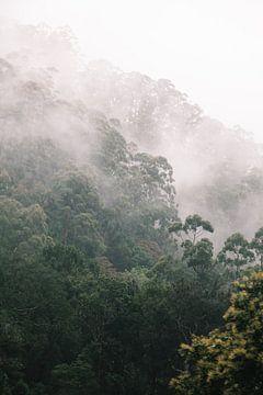 Nebel auf der Zugfahrt von Ella nach Kandy, Sri Lanka von Rebecca Gruppen