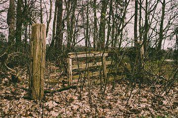 Overgroeid vervallen houten hek door een bos van TwentePics