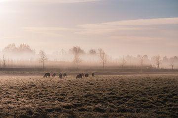 Schafweide in der Kälte von Tania Perneel