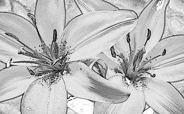 twee lelies, zwart wit, schets van Rietje Bulthuis