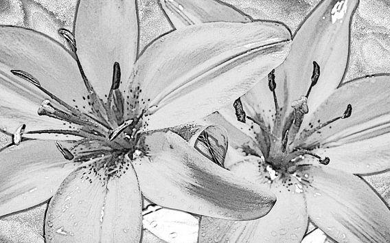 twee lelies, zwart wit, schets