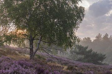 prachtige ochtend op de paarse heide van Tania Perneel