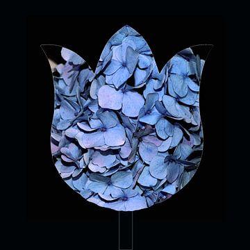 Hortensia Blue von Ina Hölzel