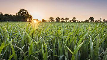 Coucher de soleil dans le Münsterland sur Steffen Peters