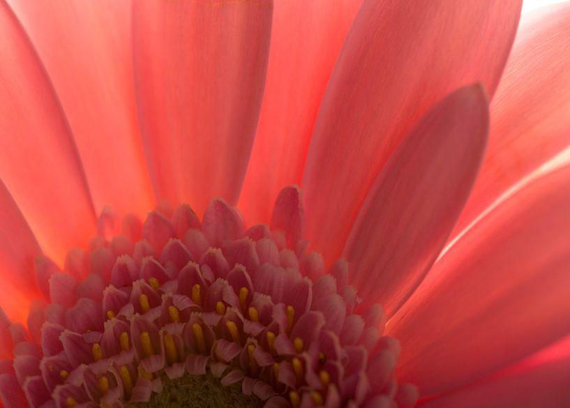 Pink van Marian Waanders