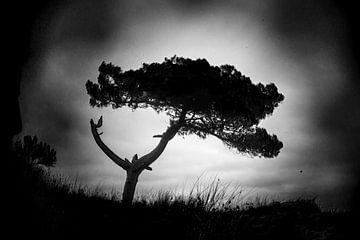 Duin met denneboom van ArtScape-ArteVista à Campo