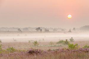 Heide in de Hoge Venen (België) van Hans Debruyne