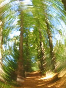 Bewegend Bos 1 van Peter Heins
