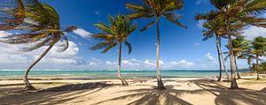 Tropical island van
