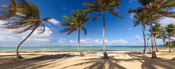 Tropical island van Ellen van den Doel