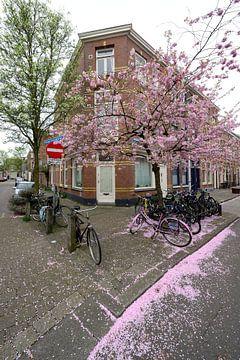Kersenbloesem in de Vogelenbuurt in Utrecht von In Utrecht