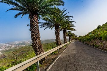 Palmbomen langs de weg in Gran Canaria