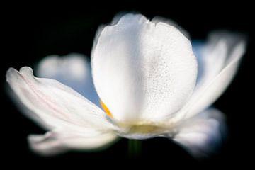 Witte Bloem... van Sanneke Kortbeek