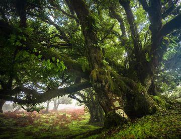 Die alte Schönheit Madeiras von Tomas van der Weijden