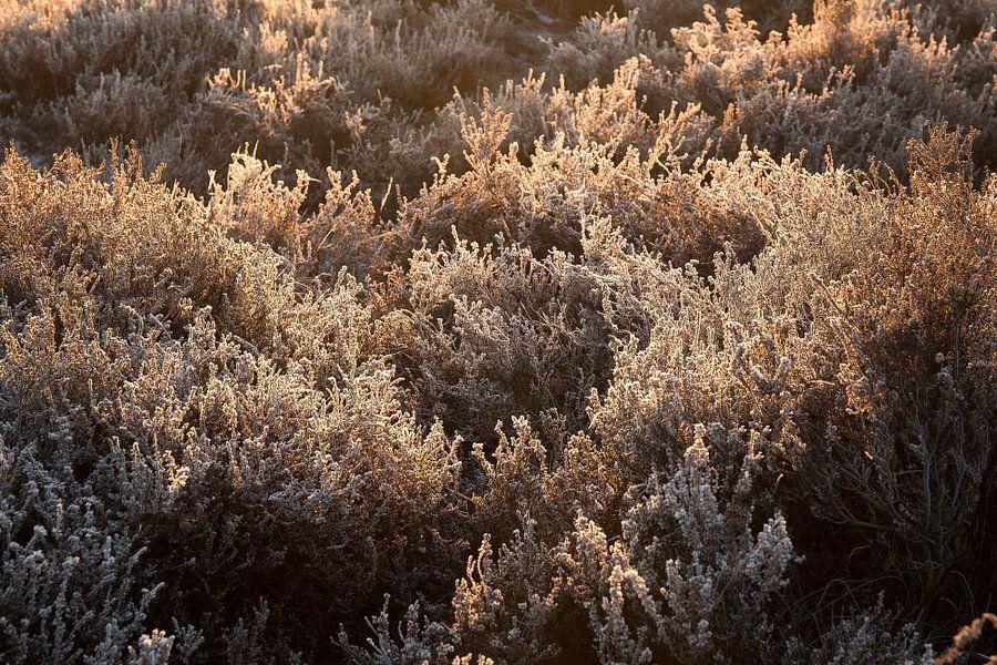 Bevroren heide van Elroy Spelbos