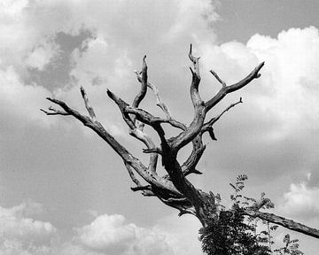 Toter Baum von Jurrian Tanke