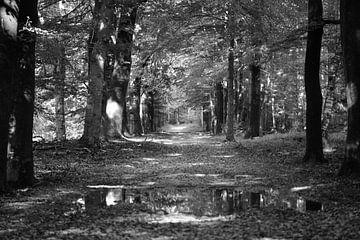 Ein Weg durch den Wald in Schwarz-Weiß von Gerard de Zwaan