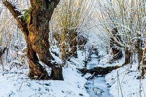 Frozen ditch between willows