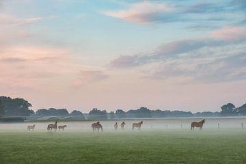 Paarden van Ilma Meijer
