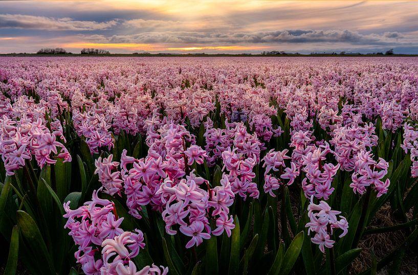 Pink carpet to the sunset von Costas Ganasos