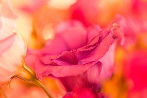 Flower in red. van