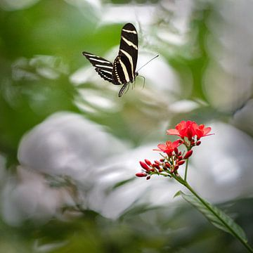Schmetterling von Jo Daniels