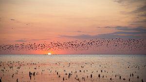 Vögel fliegen bei Sonnenuntergang über die friesischen Wattgebiete.